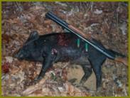 Запасы охотничьих животных