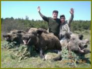Руководство охотничьим собаководством